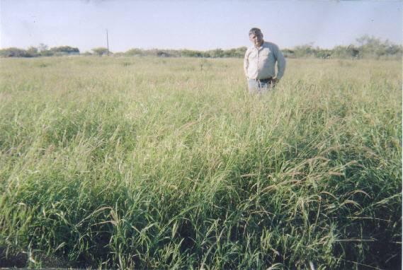 Ruiz Field 2002