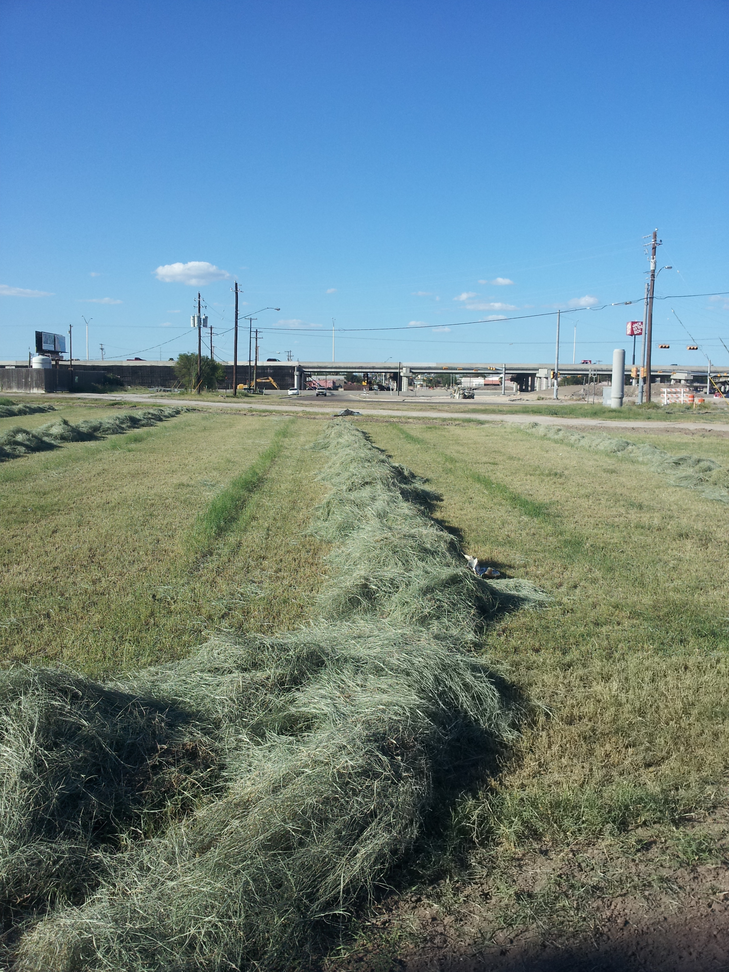 Giant Bermuda Cut for Hay Baling 2