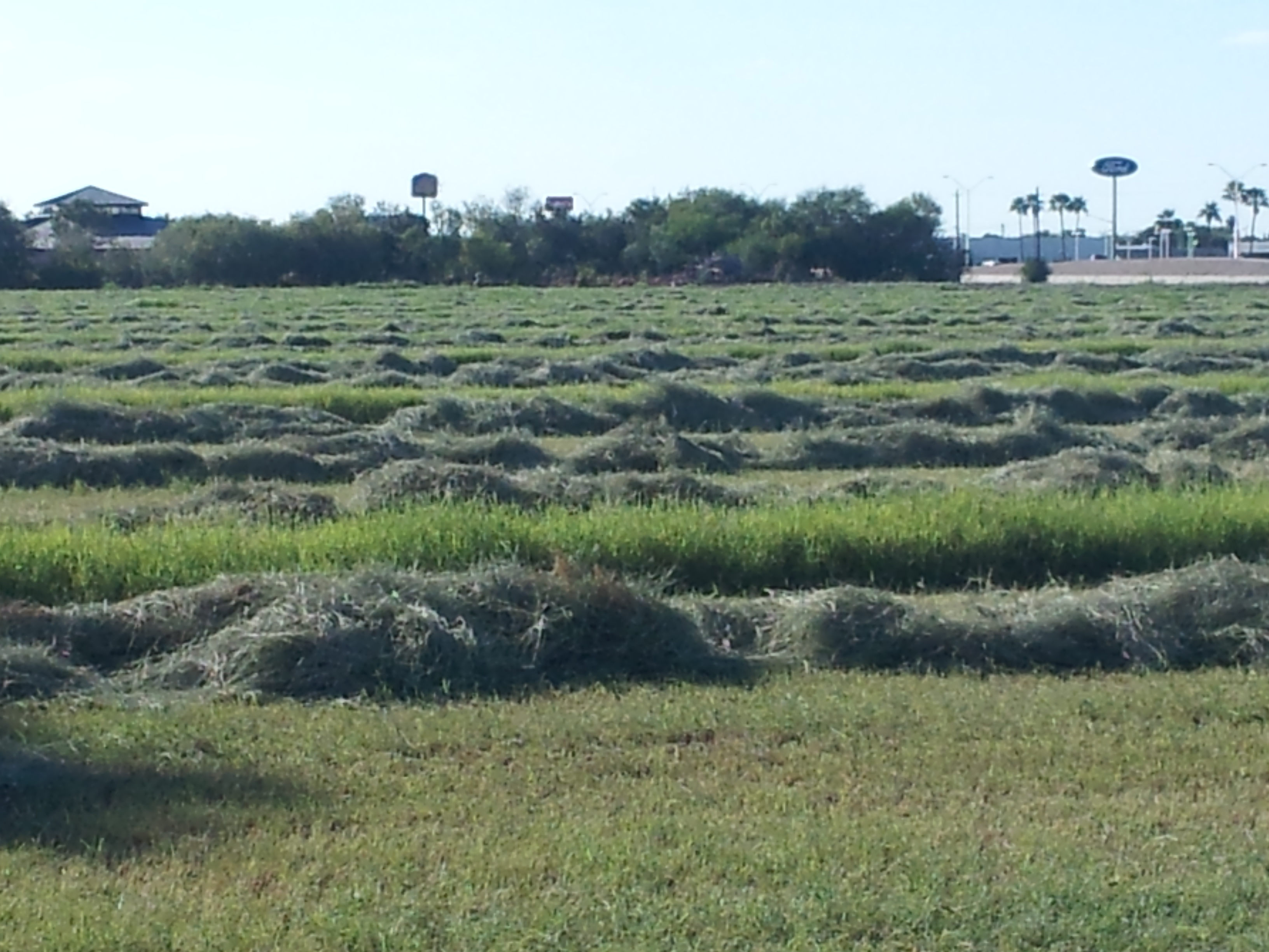 Giant Bermuda Cut for Hay Baling